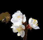 Pollination_Silo